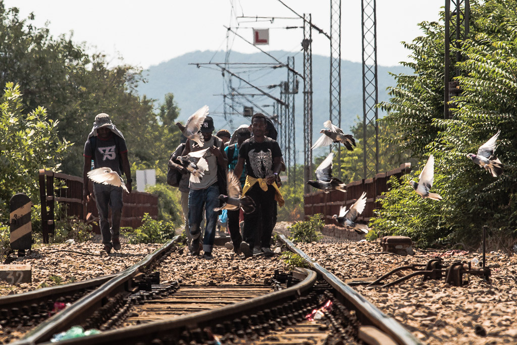 Gevgelia, Macedonia – August 8, 2015: A group of asylum seekers who crossed from Greece to Macedonia follow the lead of railroad track heading towards Gevgelia train station, from where they proceed towards Serbia and the countries of the European Union.